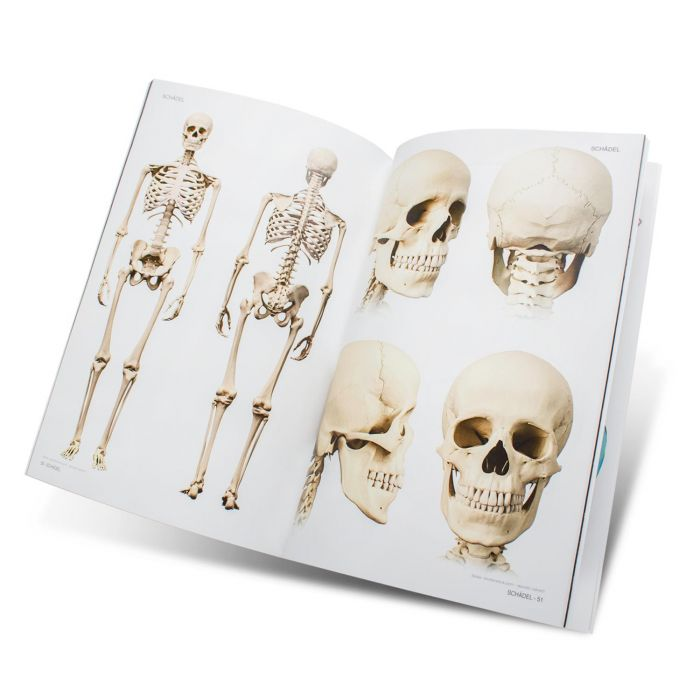Skull & Bones Book - Templates for Artists